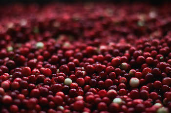 cranberry-photo-139917