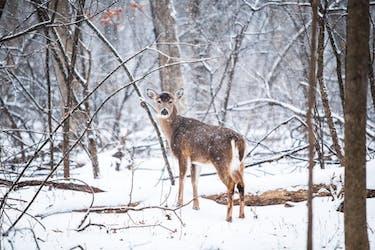 deer-photo-48635